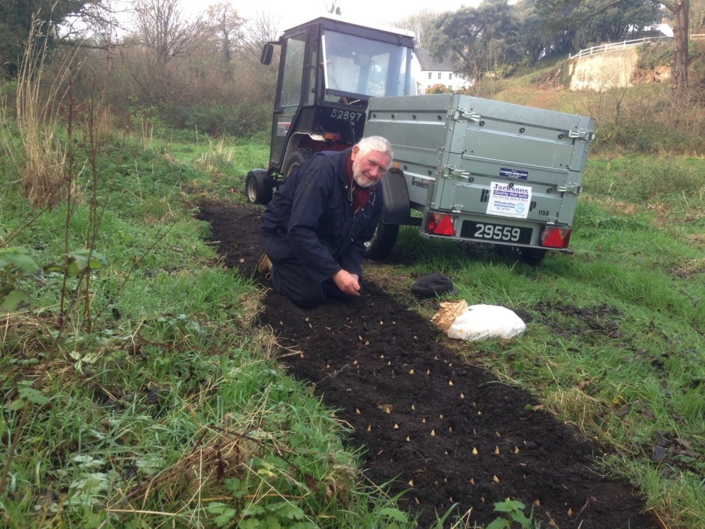 Vic planting Bluebell corms