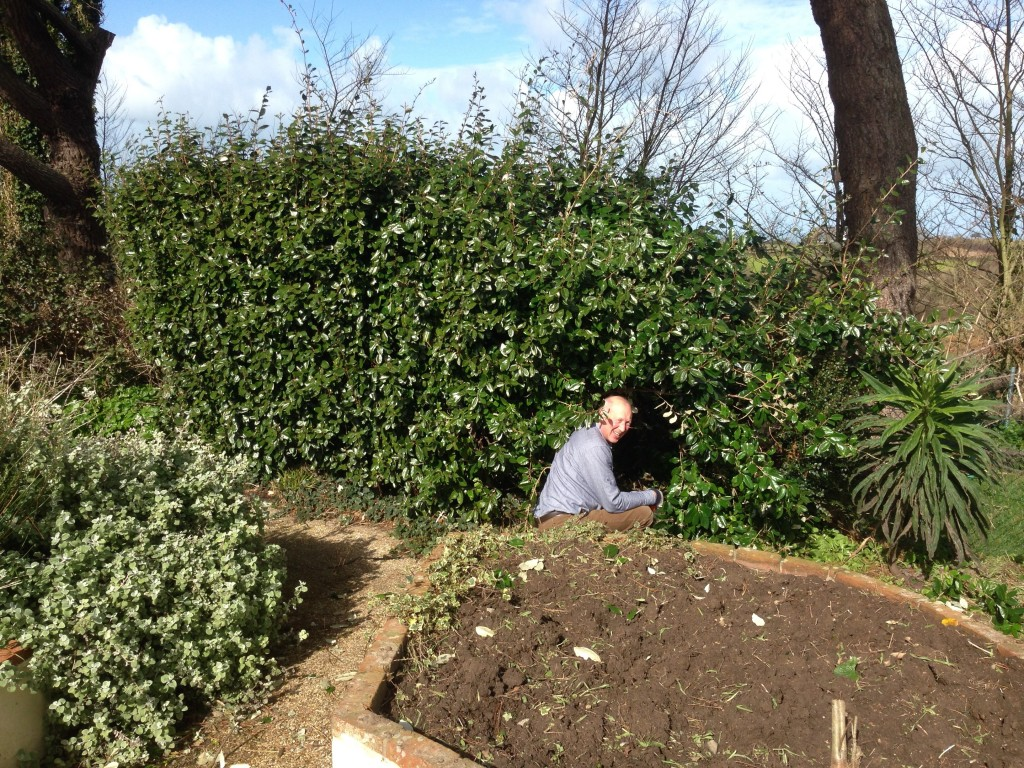 sensory_garden_hedge_removal